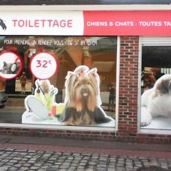 lettrage décoration vitrine toilettage